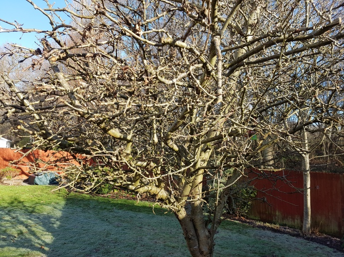 This Apple tree had it all!